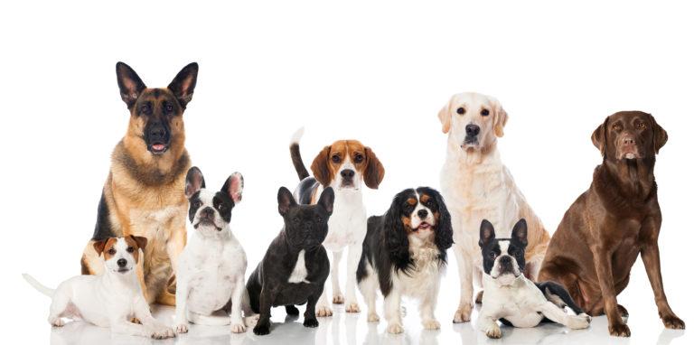Pasemska hrana za pse