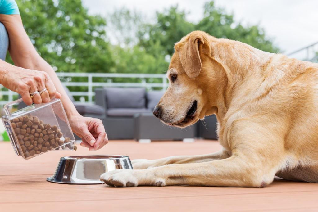 suha ali mokra hrana za pse