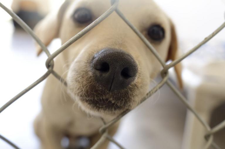 Nakup ali posvojitev psa
