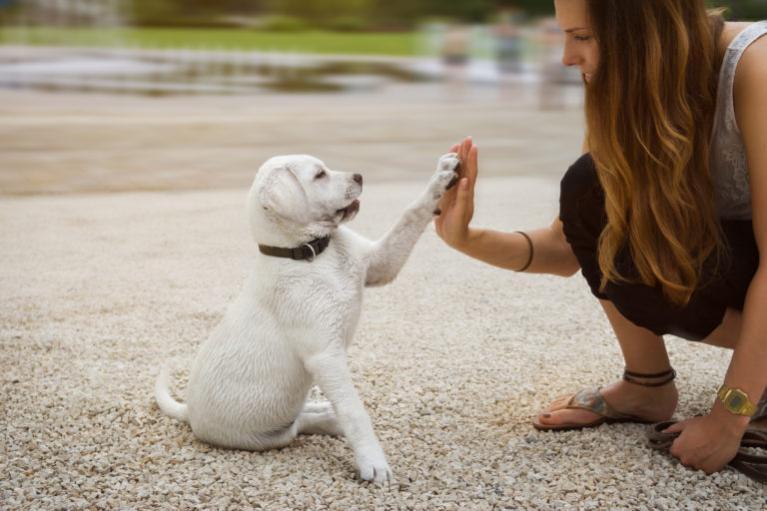 Vzgoja pasjega mladiča