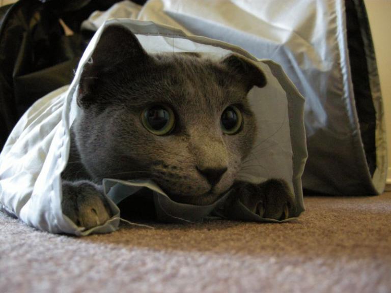 Igra z mačko