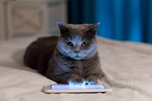Aplikacija za mačke