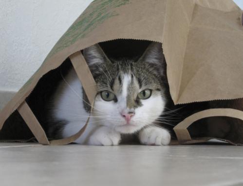 Skrivanje mačke
