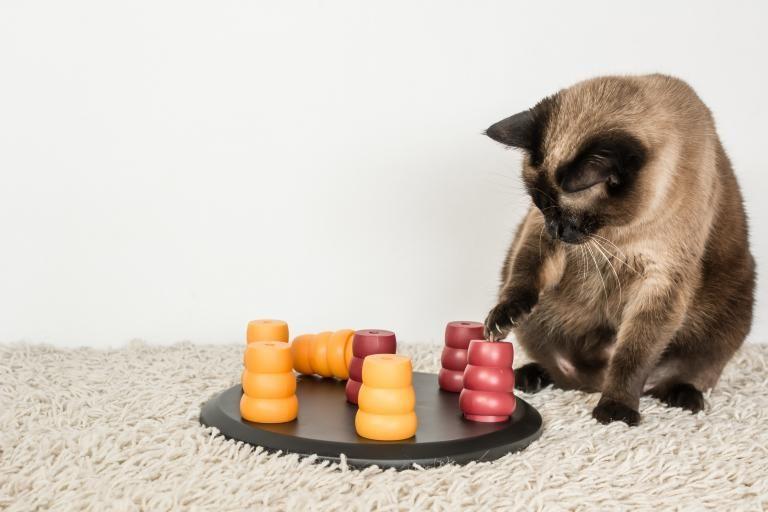 inteligentne igrače za mačke