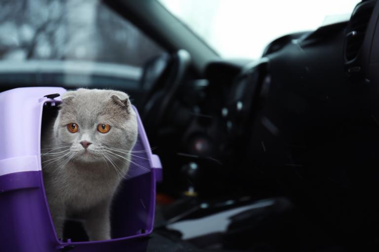 Mačka v avtu 2