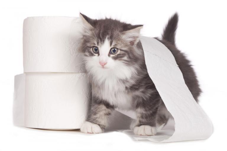 mačka wc