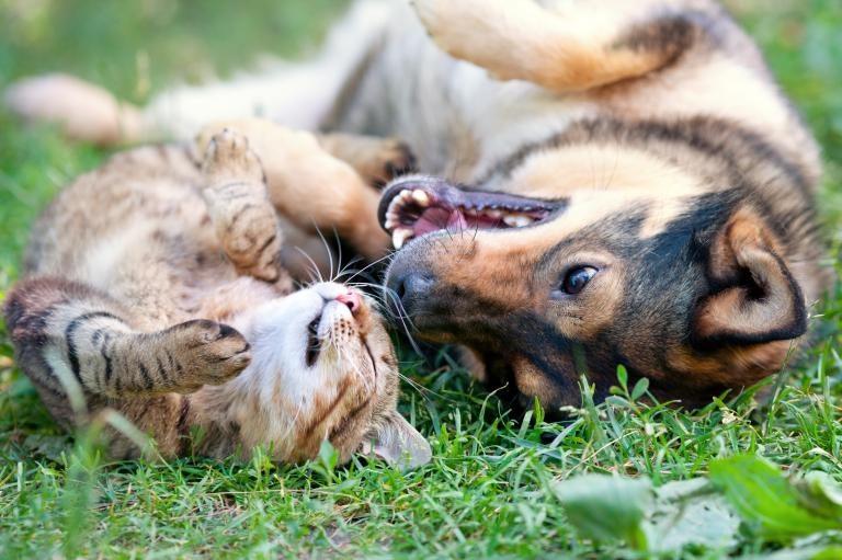 lastniki mack vs lastniki psov