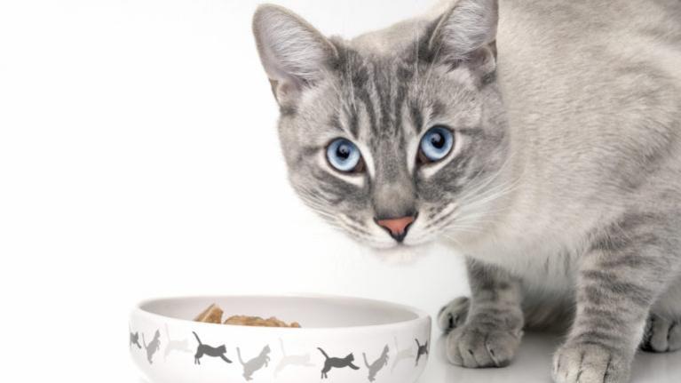 prava hrana za odrasle macke