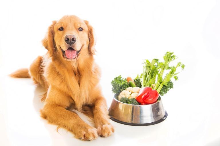 vegetarijanska hrana za pse