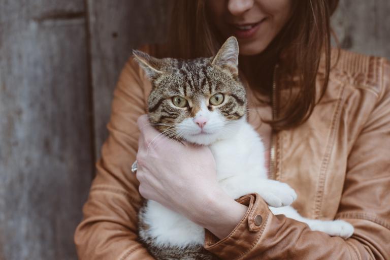 lastnica mačke