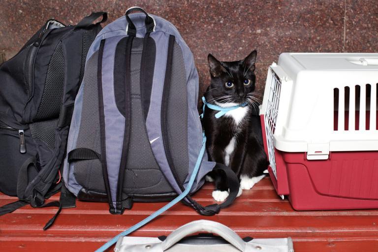 Potovanje z mačko 2