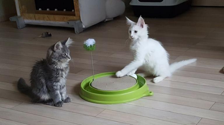 Mačje igrače