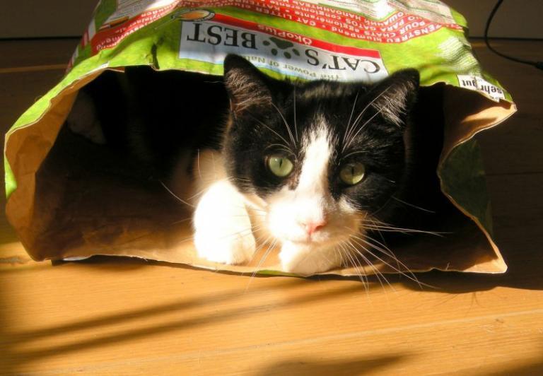 Mačji pesek