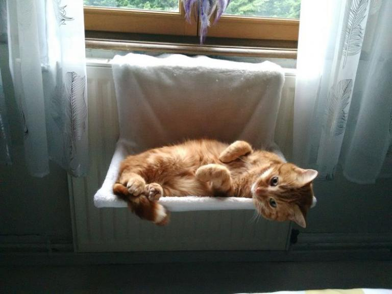 Mačka spi