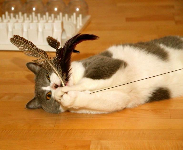 Mačja palica