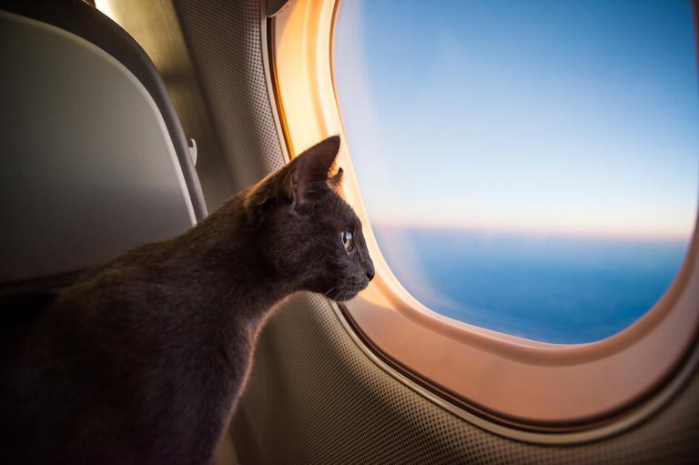 Na letalo z mačko