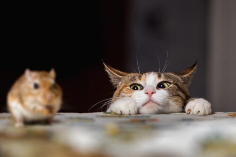 mačka na lovu