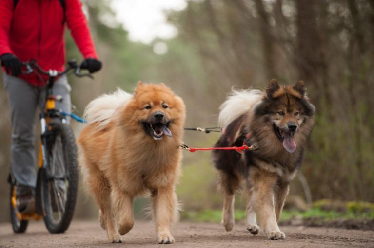 Kolesarjenje s psom