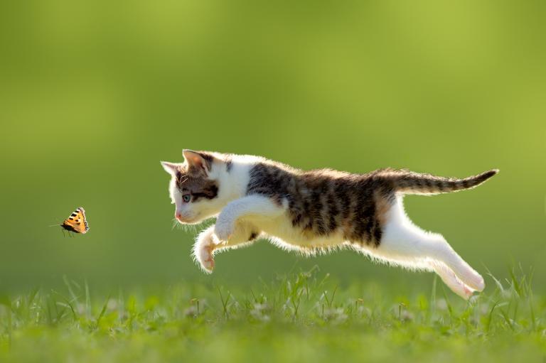 Mačka na lovu 1