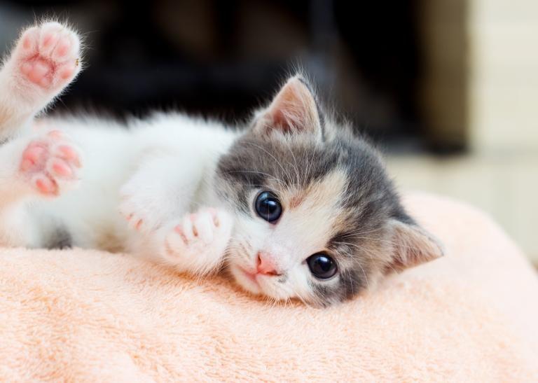Mačji mladič