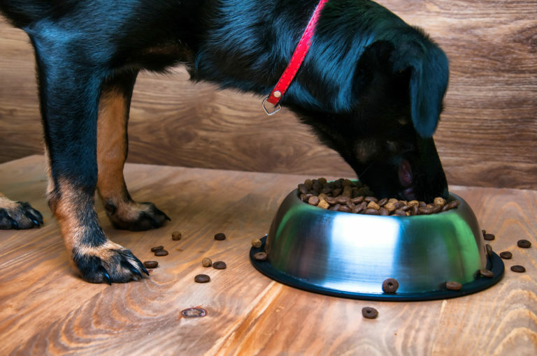 Pravilna prehrana za starejšega psa