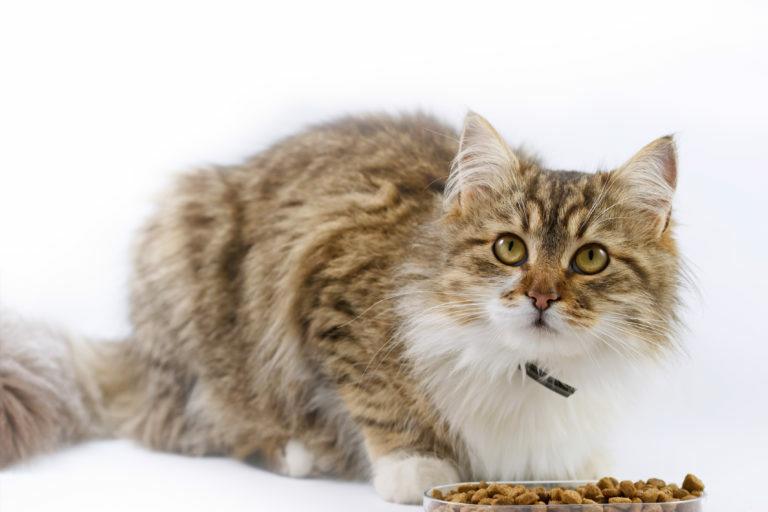 Hrana za mačke z diabetesom