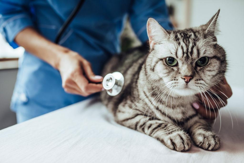 Bolezni živčevja in hormonske motnje pri mačkah