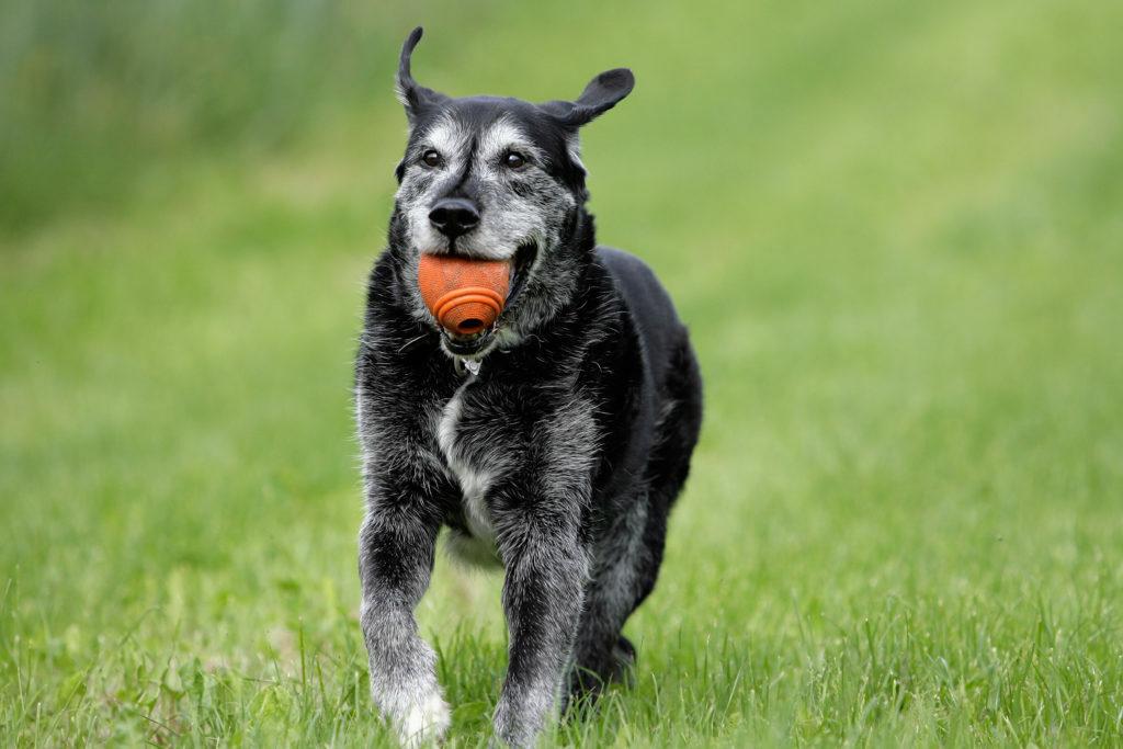 Pes z žogo