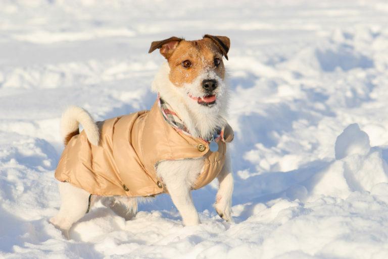 Kakšen je namen pasjih oblačil?