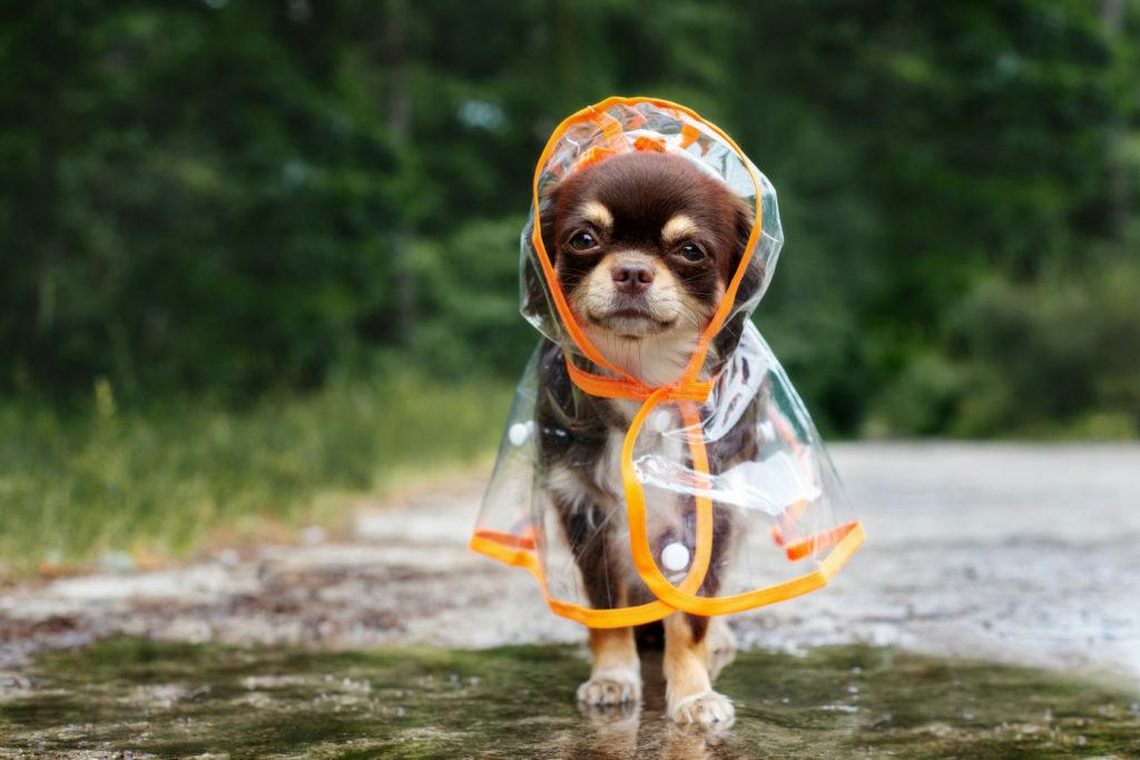 Pes na dežju s plaščem