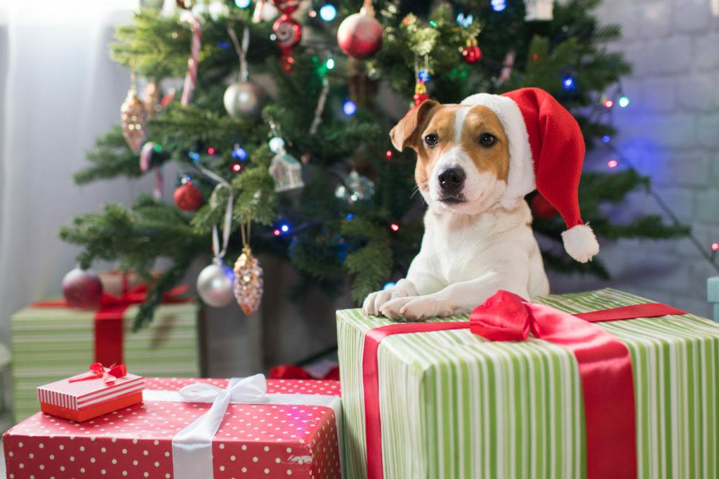 Majhen pes, velika darila