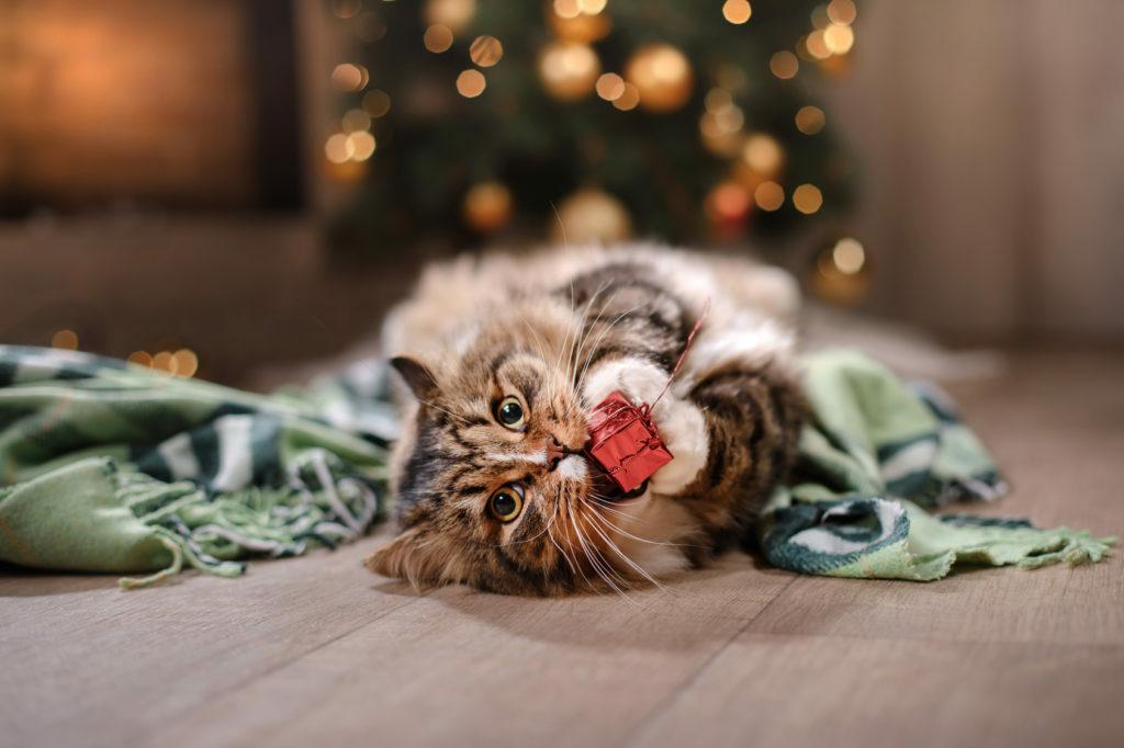 Mačka z darilom