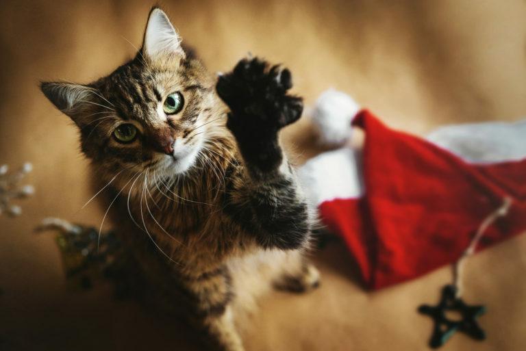 Božič z mačko