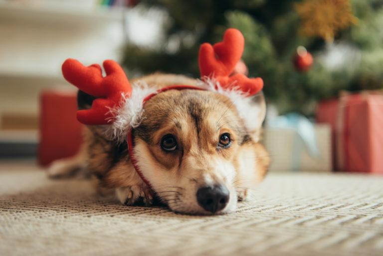 Božič s psom
