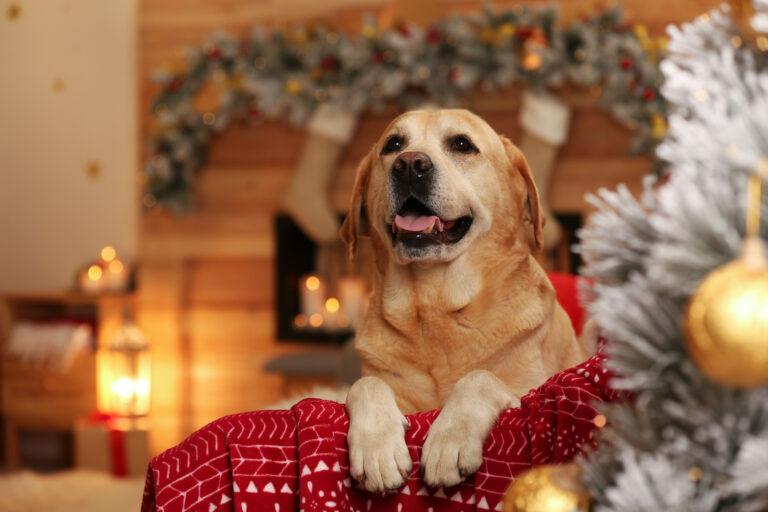 Pes na kavču