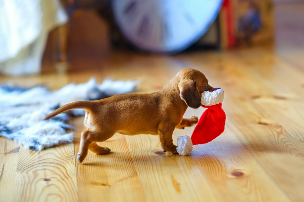 Psiček je ukradel kapo