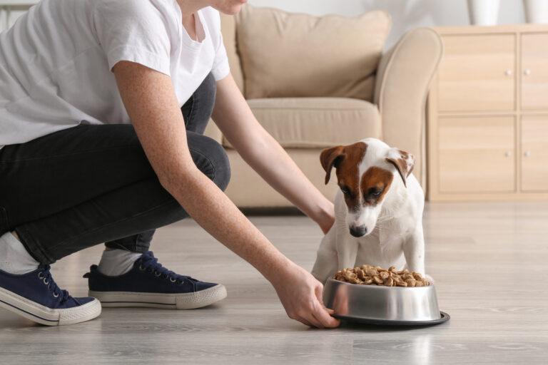 Pasja hrana pri bolezni