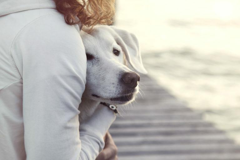Prestrašen pes – kaj narediti?