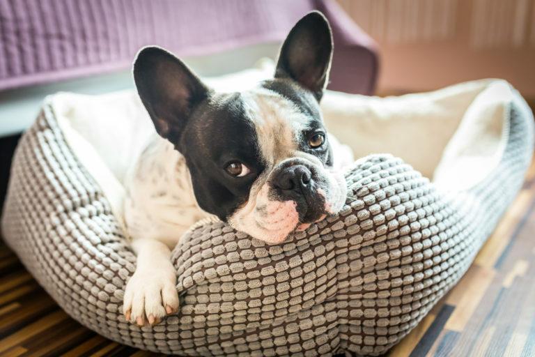Prava postelja za psa