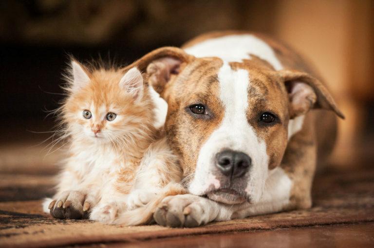 Kako navaditi psa in mačko na skupno življenje