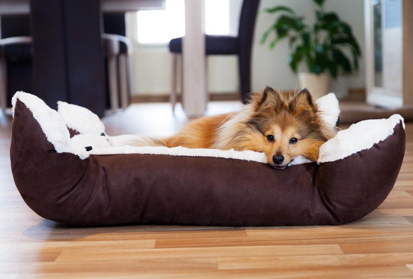 Prava postelja za vašega psa