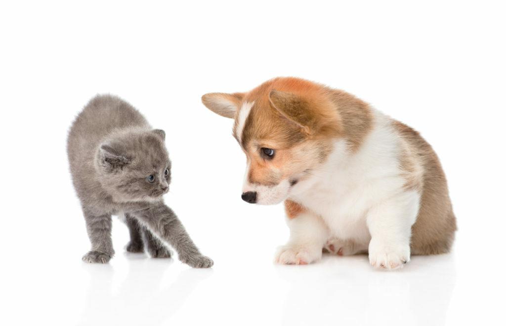 Mali muc, mali pes