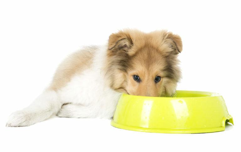 Prava hrana za kastriranega psa
