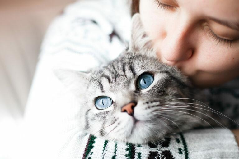 Konjunktivitis pri mačkah