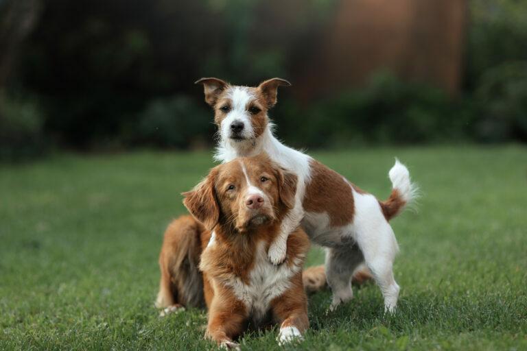 Vzreja različnih psov