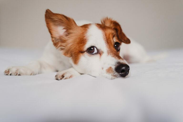 Koronavirus pri psih