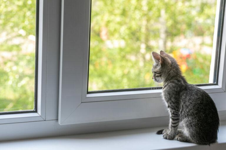Koronavirus pri mačkah