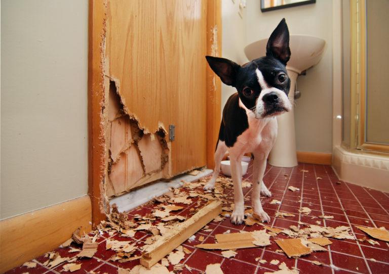 Moj pes uniči vse