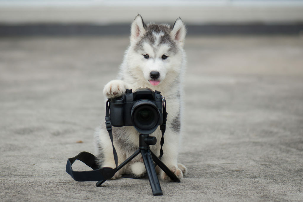 fotografije s psi