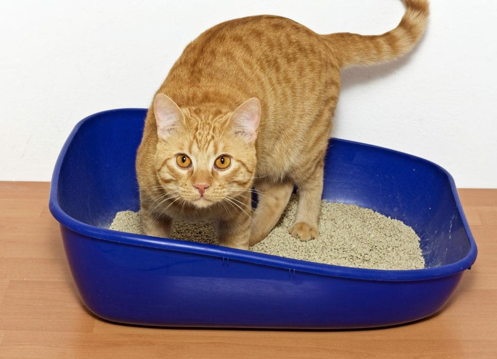 Mačka označuje svoj teritorij: zakaj in kaj narediti?